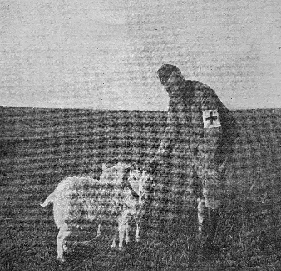 Daly_lambs.jpg